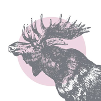 the-pink-moose-linkup-variant